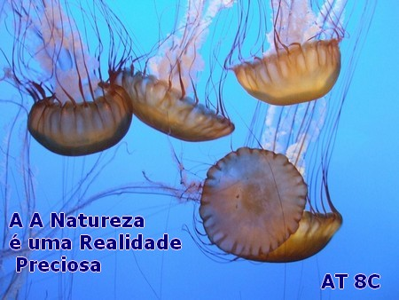 jellyfish rosadas em mar azul e a frase do Alex