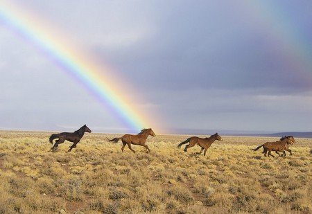 https://www.maxpixel.net/Animals-Released-Rainbow-Wild-Horses-Running-Feral-2239420