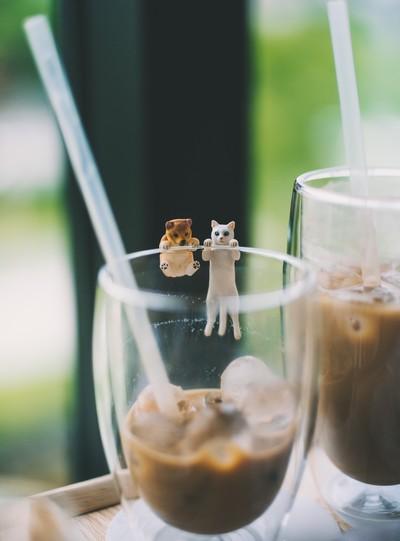 cão e gato minúsculos a cair em copo de gelado