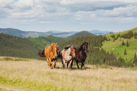 3 cavalos a galope
