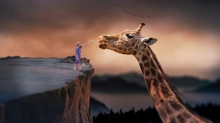 Menino que alimenta Girafa sobre abismo