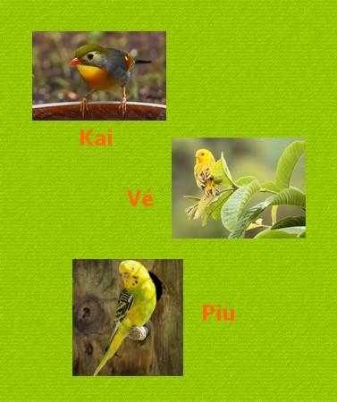 rouxinol, canário e piriquito sobre fundo verde