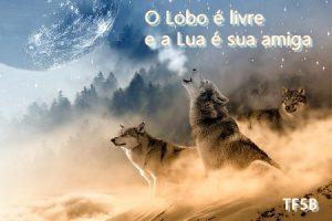 lobos uivando à lua