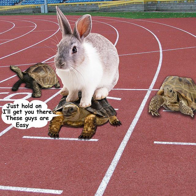 tartaruga em corrida com outras transportando lebre sobre a carapa ça