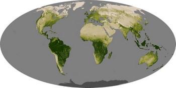mapa da vegetação segundo o observatório da Nasa