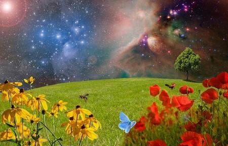 estrelas sugeridas descendo num campo com borboletas
