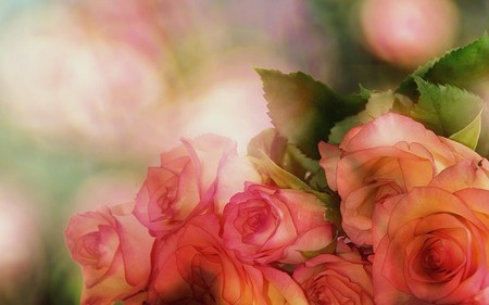 rosas de s. Valentim