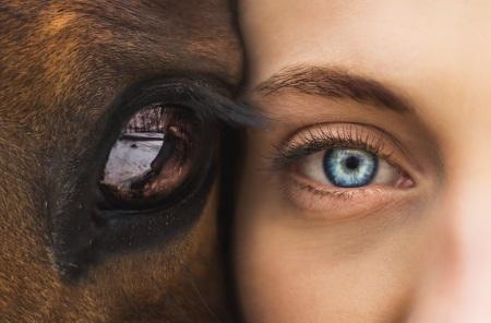 rosto de jovem encostado a rosto de cavalo