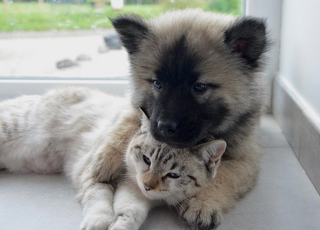cão e gato em carinho mútuo
