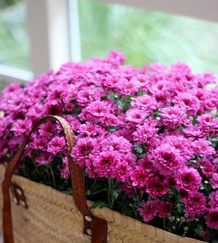 Flores rosa em cesto