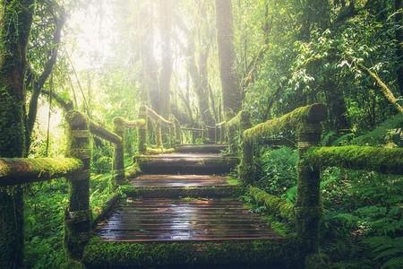 a floresta húmida e sombria