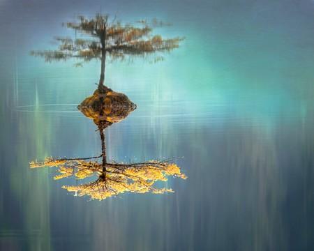 pequena árvore invertida com seu reflexo