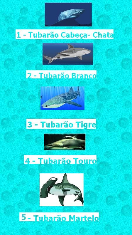 ordem dos tubarões