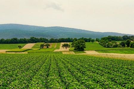 campos cultivados