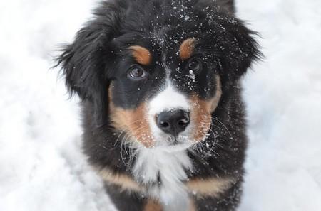 cão na neve