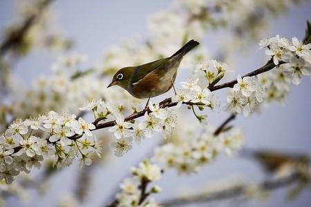pássaro em ramo florido